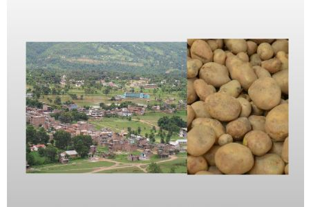 Collective Potato Farming Turning Corona's Challenge Into An Opportunity